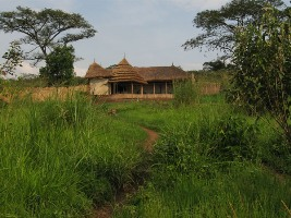 Chimps' Nest Lodge - Kibale Forest National Park Accommodations & Lodging Options