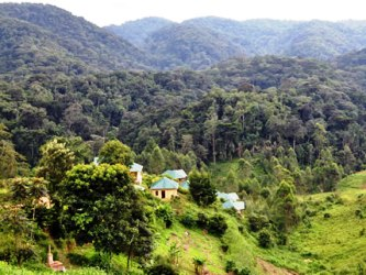 budget to luxury lodging and accommodations – Bwindi Gorilla Tracking - Gorilla Safari Lodge