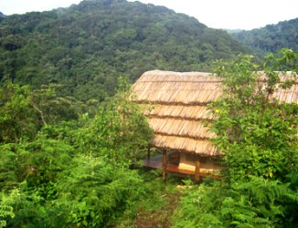 budget to luxury lodging and accommodations – Bwindi Gorilla Tracking - Cuckooland Lodge