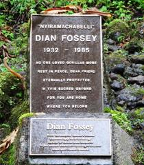 Dian Fossey – Research Camp and Gravesite Hike – Volcanoes National Park