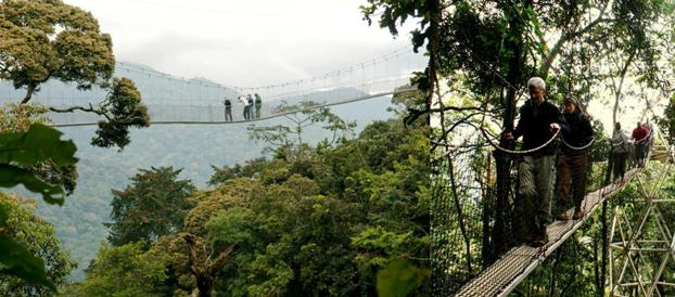 Nyungwe Canopy walk and Hike
