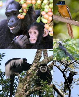 Uganda Travel Information, Advice and Tips