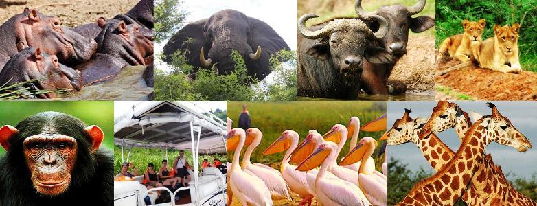3 Day Queen Elizabeth National Park Wildlife Safari in Uganda