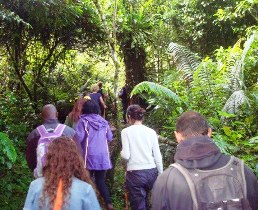 8-Day Gorilla Trekking Chimpanzee Tracking and wildlife