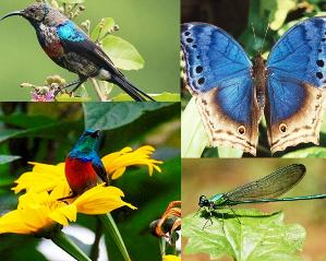 Bwindi Impenetrable Forest - birds and Butterflies