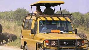 Things to explore and See at Murchison Falls National Park - Uganda - Game Drives (Safari drives)