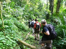 Kibale Forest Chimpanzee Trekking Safaris - Adventurous Chimpanzee Trekking in Kyambura Gorge