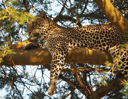 Queen Elizabeth Park - Game Drive and Kazinga Channel Boat Safari