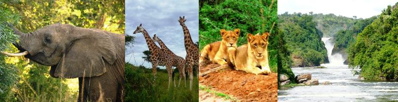 facts, information, background and best safari tours - Murchison Falls National Park - Uganda