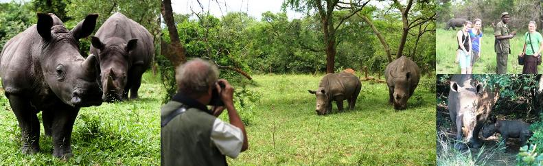 ziwa rhino sanctuary near murchison falls national park uganda