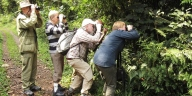 Uganda short wildlife safaris in Uganda - 2 day budongo forest chimpanzee