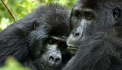 4 Day Bwindi Gorilla Trek Tour and Queen Elizabeth Park Wildlife Safari - Information you should not miss