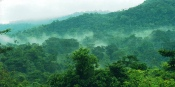 Bwindi Impenetrable national park from Budget to Luxury while you go Mountain Gorilla Tracking