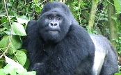 Bwindi Impenetrable Forest Park Lodging and Accommodations - Obtaing Uganda gorilla permits