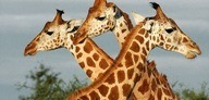 Queen Elizabeth Park Wildlife Uganda Safari Itinerary - Queen Elizabeth National Park - things to do