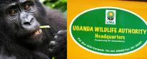 Bwindi Impenetrable Forest Park Lodging and Accommodations - booking Uganda gorilla permits