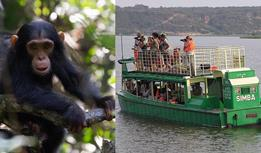 Chimpanzee and Gorilla Tracking (Trekking) Uganda tour - 5 Day Kibale Chimpanzee Tracking and Queen Elizabeth Park Wildlife Uganda Tented Safari