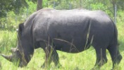 Transportation in Kampala & throughout Uganda - visit ziwa rhino