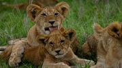2 day Lake Mburo Uganda Wildlife Safari Tour - national parks